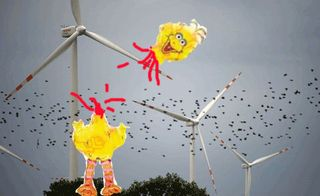BigBird-wind-farm